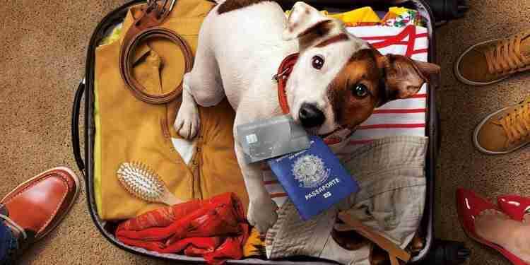 Como levar seu animal de estimação na viagem