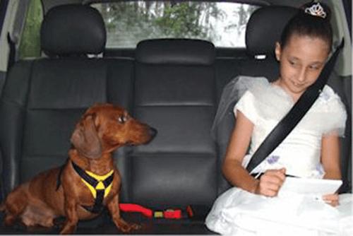 Como levar seu Pet para na viagem?