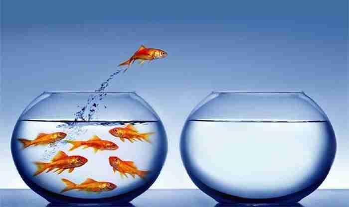 Quais os riscos do crescimento profissional?